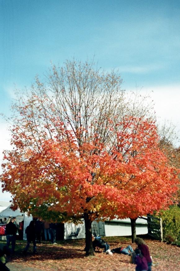 Blazing Branches
