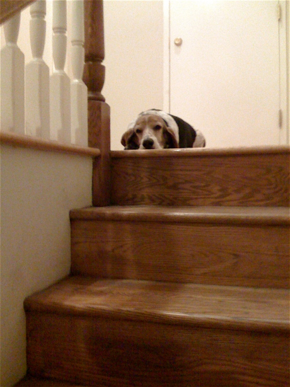 Hanging Out on the Stairs with Joey