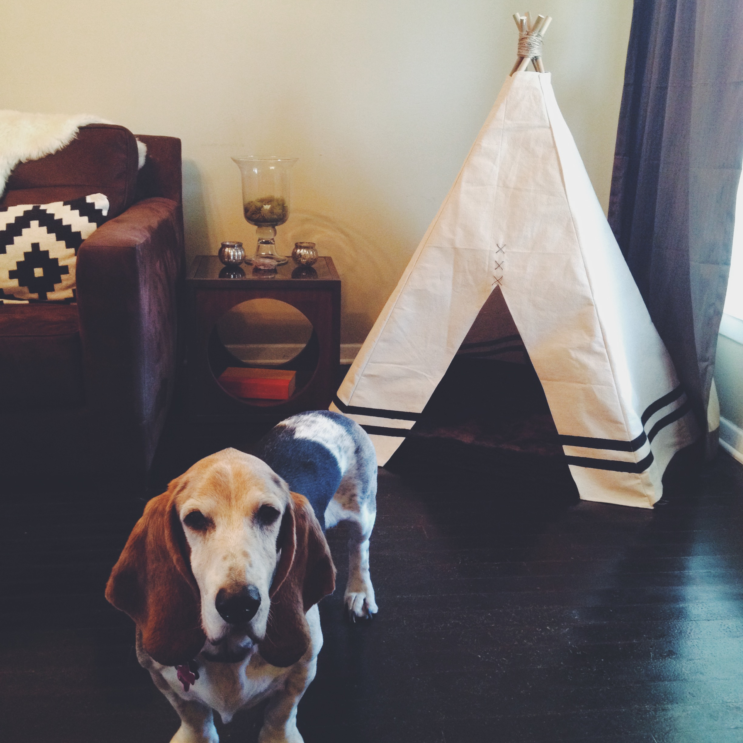 Processed with VSCOcam with f2 preset & dog tent | Love Is All You Knit
